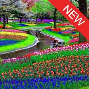 Keukenhof flower tour